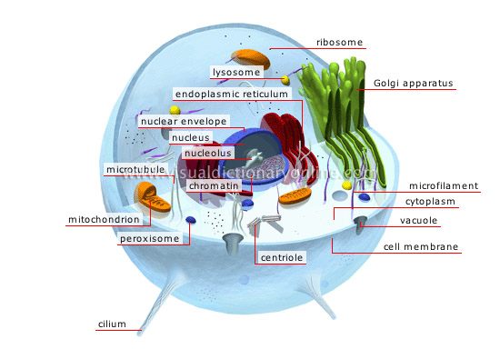 Various Parts of Animal Cell http://nivinebarraj.edublogs.org/category/uncategorized/